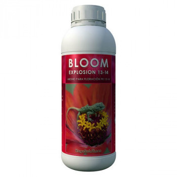Bloom Explosion 13-14