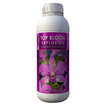 Top Bloom Explosion