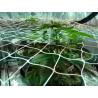 Malla cultivo sog / scrog