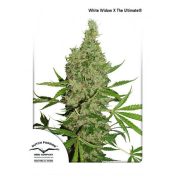 White Widow X The Ultimate...