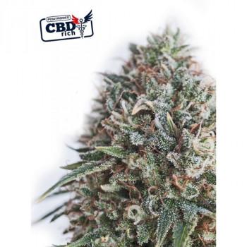 CBD+ CRITICAL ♯47