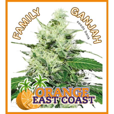 Orange EastCoast