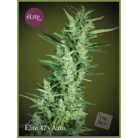 ELITE 47   -  autofloreciente