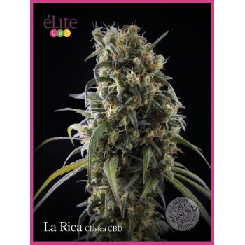 La Rica - Clásica CBD....