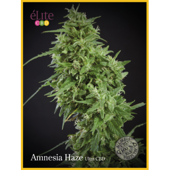 Amnesia Haze - Ultra CBD