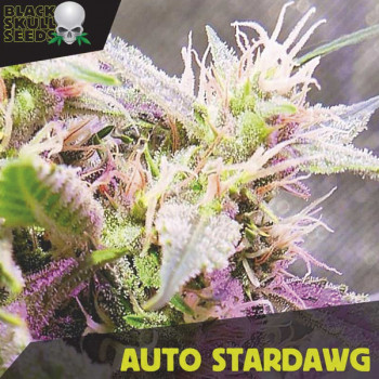 Auto Stardawg