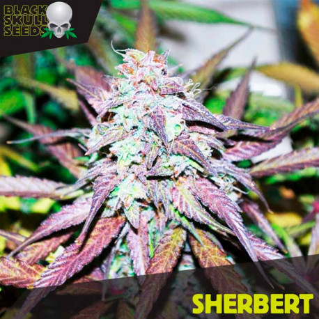 Sherbert