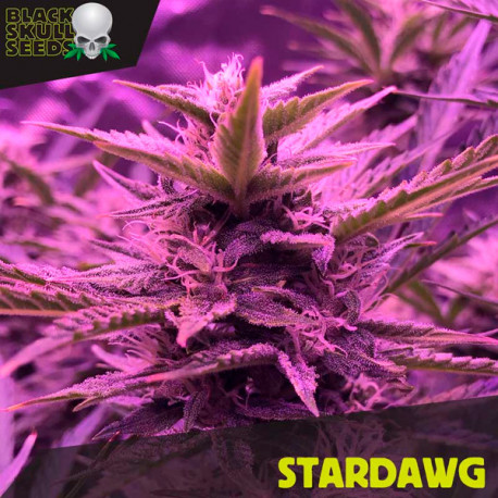 Stardawg