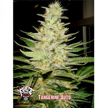 Auto Tangerine