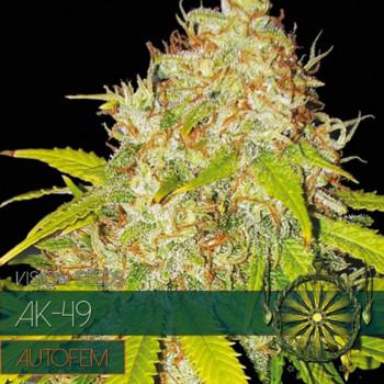 Auto AK 49