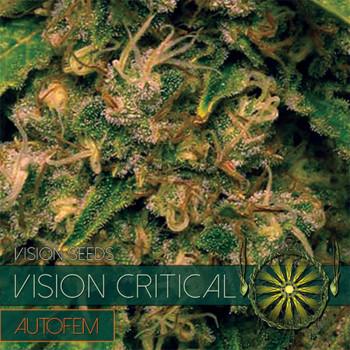 Auto Vision Critical