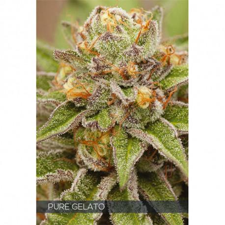 Pure Gelato