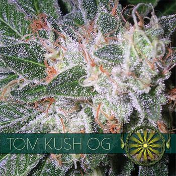 Tom Cush OG