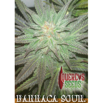 Barraca Sour