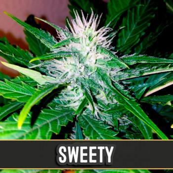 Auto Sweety