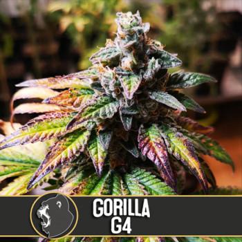 Gorilla G4