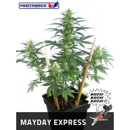 May Day express