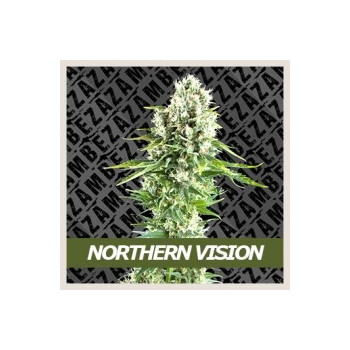 Northern Vision