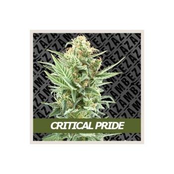 Critical Pride