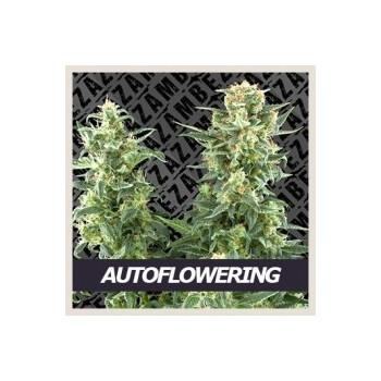 Autoflowering mix