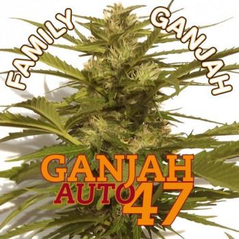 AUTO GANJAH 47
