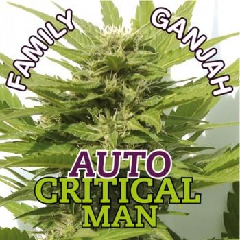 auto Critical-Man