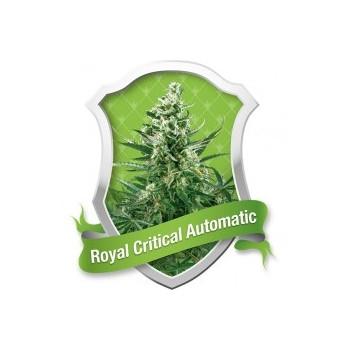 Royal Critical Automatic
