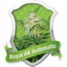 Royal AK automática