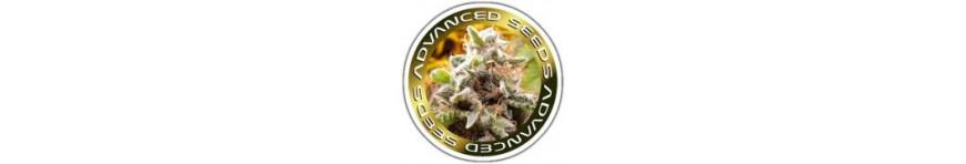 Advanced seeds - Planta-T Alicante grow online