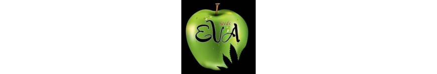 EVA Seeds - Planta-T Alicante grow online