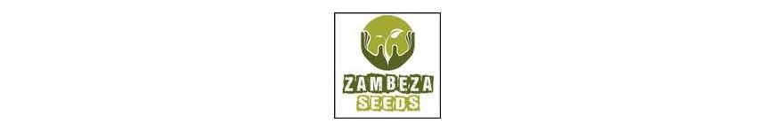 ZAMBEZA Seeds - Planta-T Alicante grow online